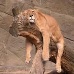 Guida Materassi Memory: quale materasso scegliere. Come dormire bene.